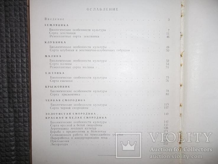 Культура ягодников в приусадебных садах.1966 год., фото №11