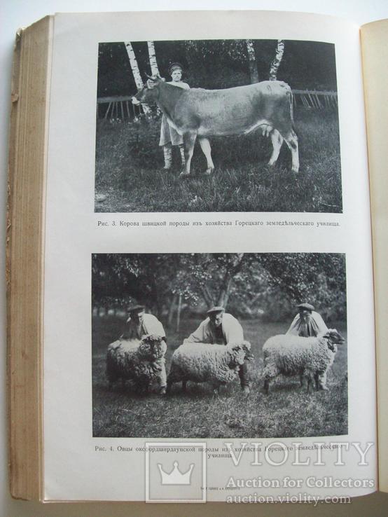 Сельское хозяйство в 1908 году (много рисунков) табак, скот, производство (1000 с.), фото №6
