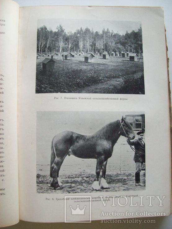 Сельское хозяйство в 1908 году (много рисунков) табак, скот, производство (1000 с.), фото №7