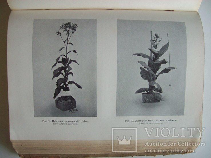 Сельское хозяйство в 1908 году (много рисунков) табак, скот, производство (1000 с.), фото №13