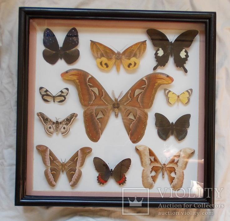 Коллекция тропических бабочек в рамке