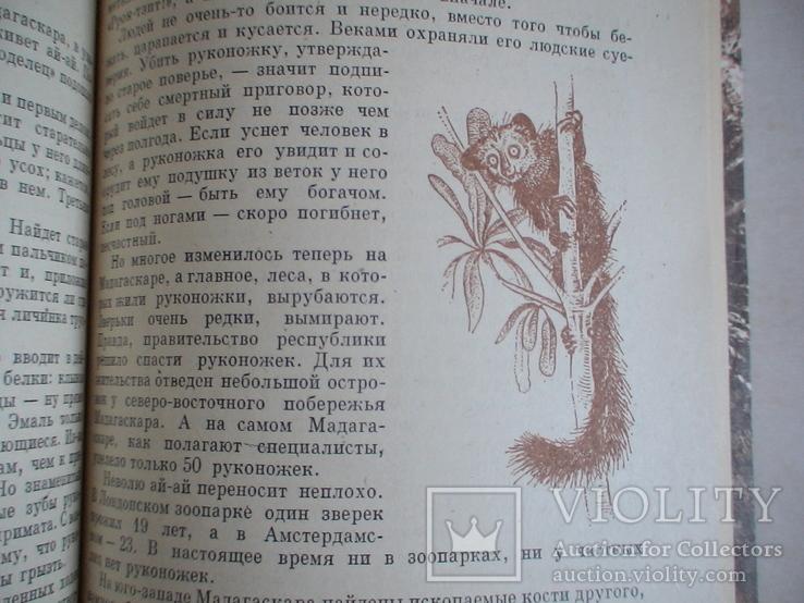 """И. Акимушкин """"Причуды природы"""" 1981р., фото №4"""