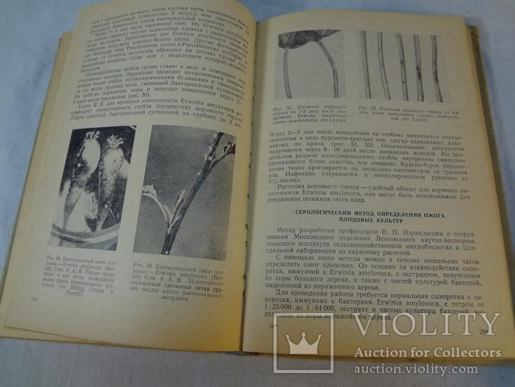 Руководство по досмотру и эксперт. растит. и других подкарантинных материалов, 1972 г, фото №8