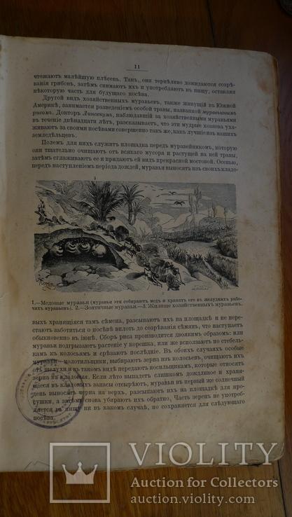 Справочник о животных, фото №3