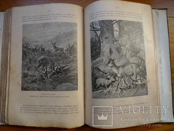 Справочник о животных, фото №5
