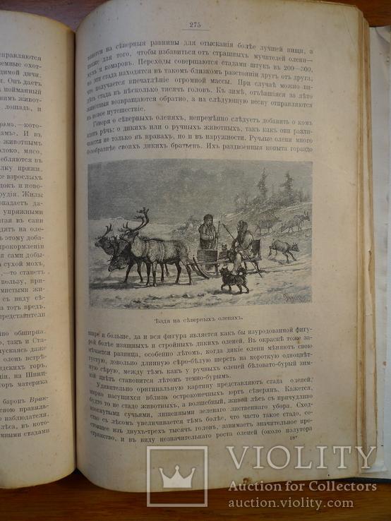 Справочник о животных, фото №8