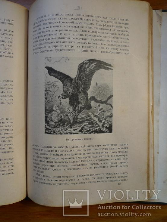 Справочник о животных, фото №9