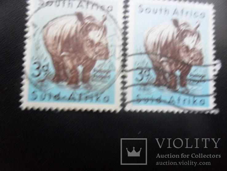 Фауна. Южная Африка.  носорог.  гаш