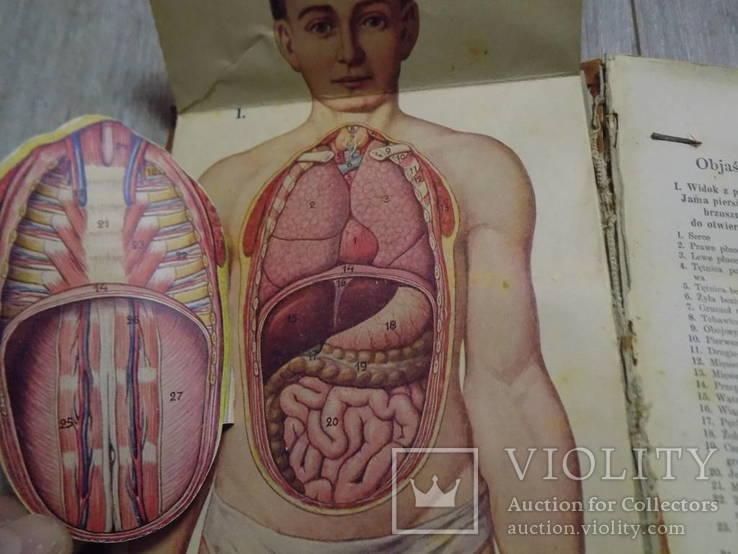 Медична енциклопедія на польській 1930 в двох томах, фото №4