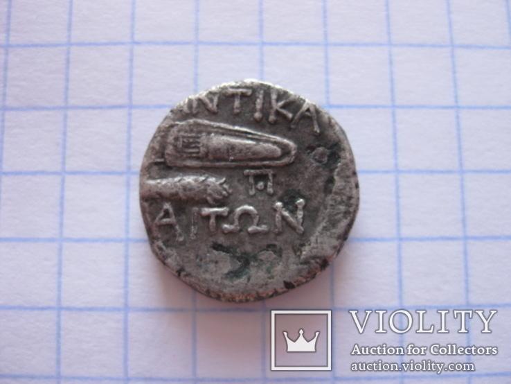 Драхма Пантикапея., фото №6