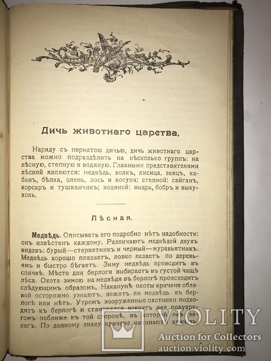 1909 Охота Ружья Собака Дичь, фото №3