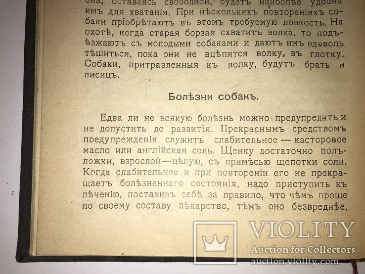 1909 Охота Ружья Собака Дичь, фото №5
