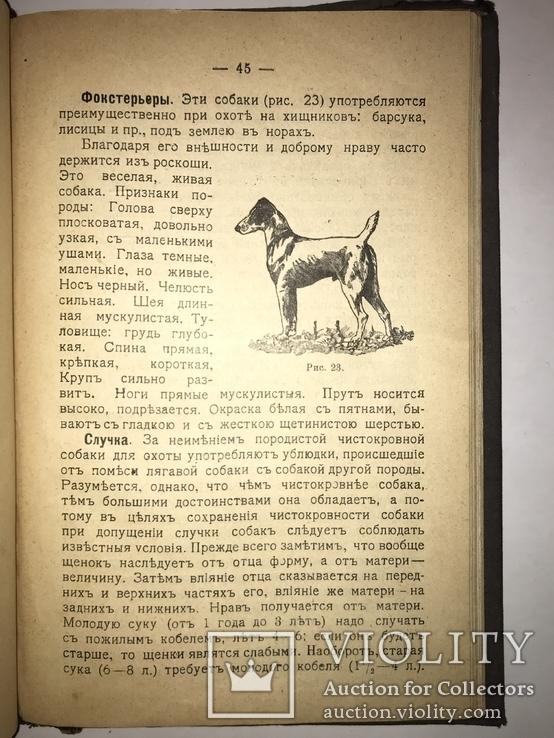 1909 Охота Ружья Собака Дичь, фото №6