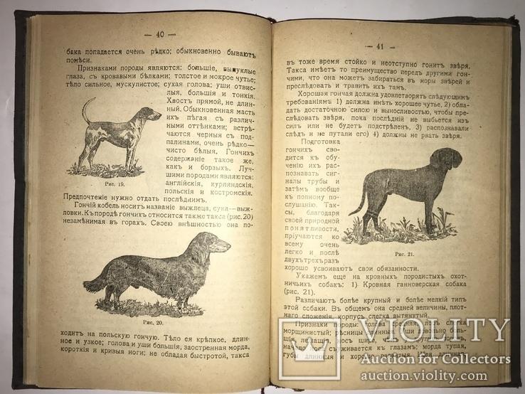 1909 Охота Ружья Собака Дичь, фото №7
