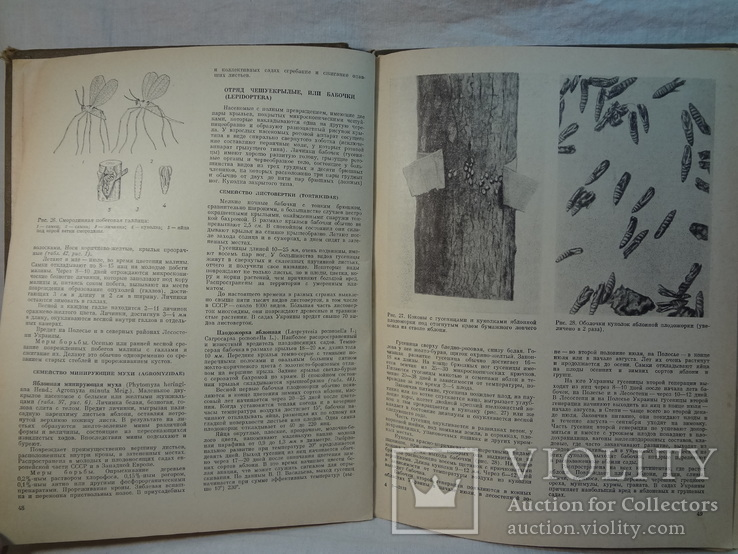 Атлас вредителей плодовых и ягодных культур, 1976 г, фото №5