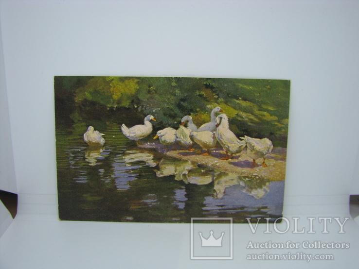 Открытка Утки купаются в реке. чистая, фото №2