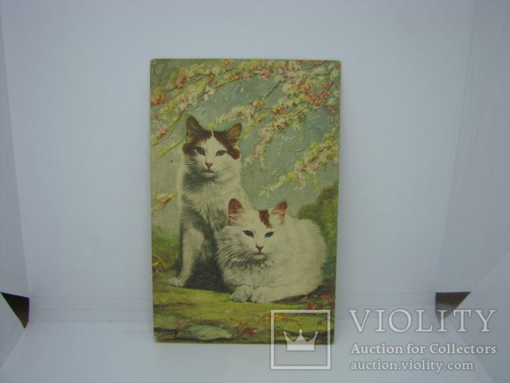 Открытка Два кота. Кошка, фото №2