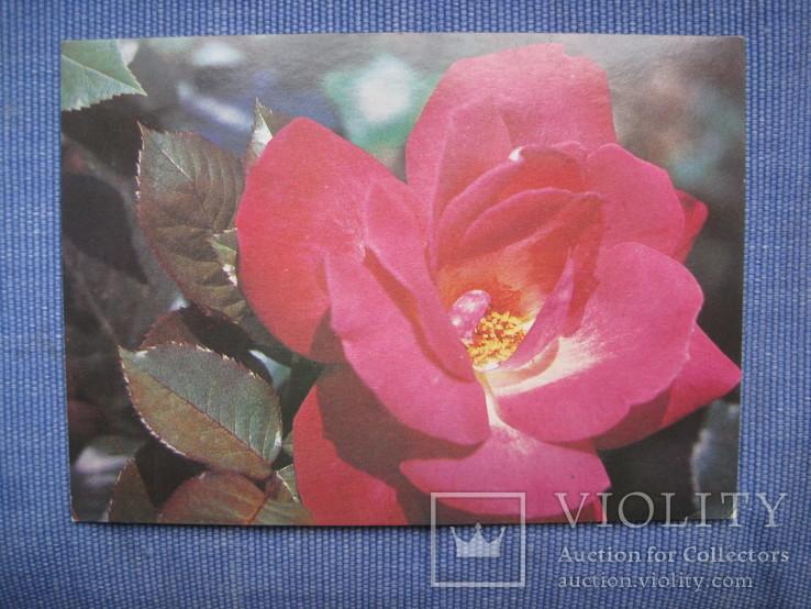 Открытки цветы, фото №8