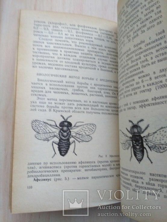 Спутник садовода 1969р., фото №7