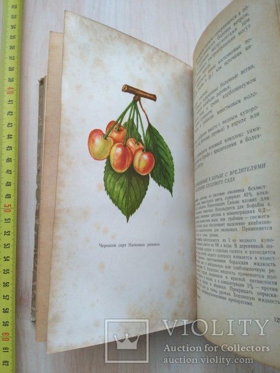 Спутник садовода 1969р., фото №8
