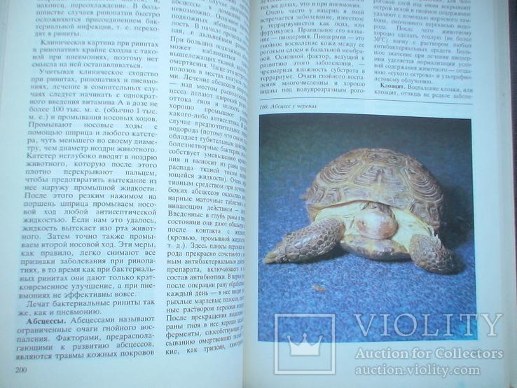 Террариум и его обитатели 1991р., фото №6