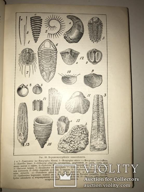 1914 Динозавры Геология  Издание Девриена, фото №9