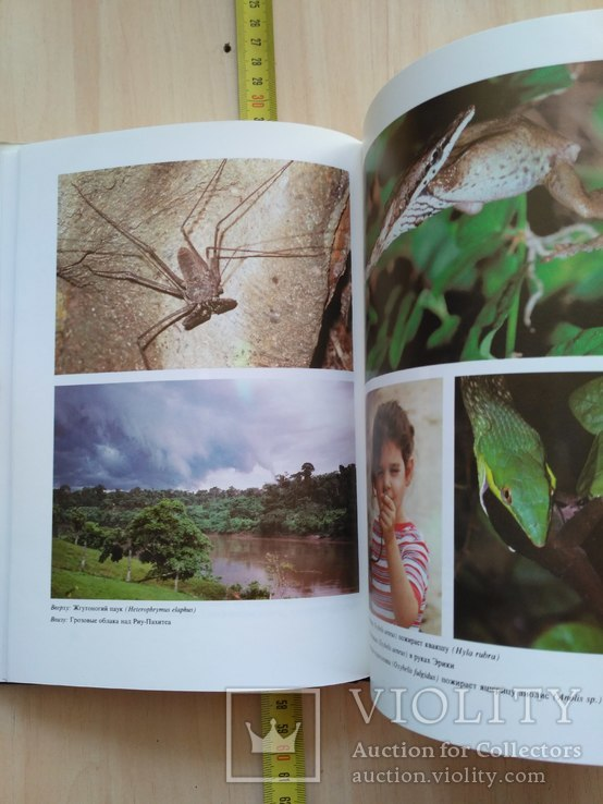 "Янош Регеш ""Зеленый ад, исчезающий рай"" (тропический лес) 1989р., фото №12"