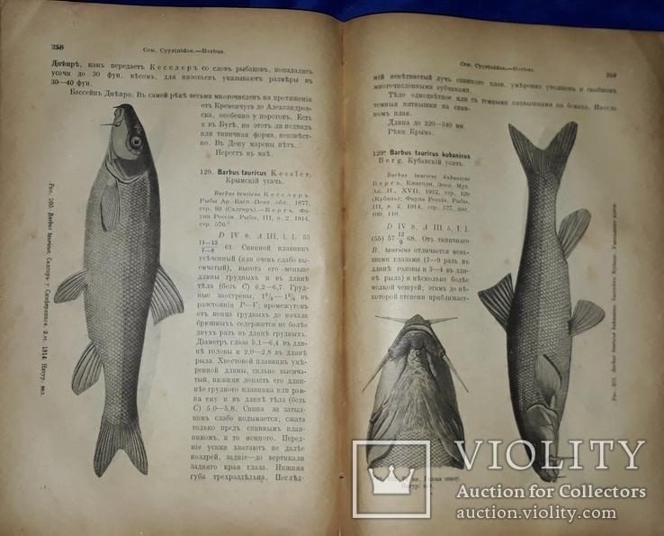 1916 Рыбы пресных вод Российской империи