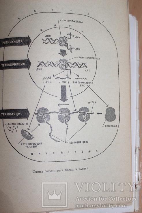 Тайнопись жизни .Азерников 1966 год  Все о ДНК, фото №6