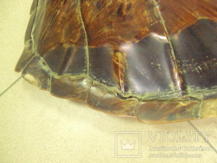 Африка панцирь черепахи, вес 1,19 кг, фото №4