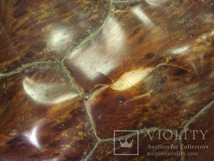 Африка панцирь черепахи, вес 1,19 кг, фото №6