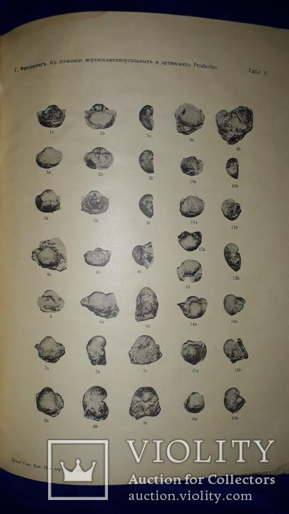 1915 Палеонтологические заметки 31.5х25 см., фото №6