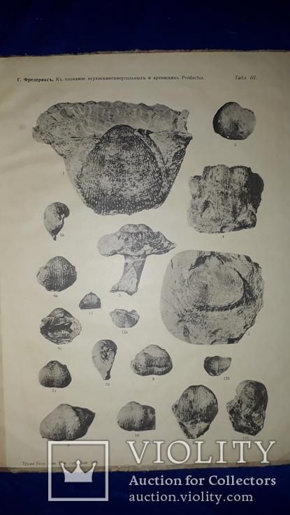 1915 Палеонтологические заметки 31.5х25 см., фото №11