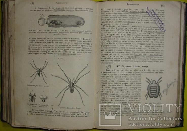 1898  Учебник зоологии. Рихард Гертвиг.  Одесса, фото №7