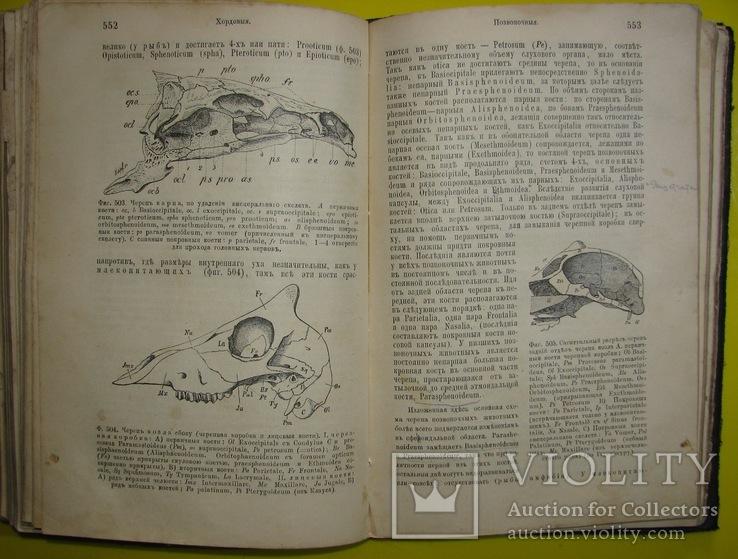 1898  Учебник зоологии. Рихард Гертвиг.  Одесса, фото №8