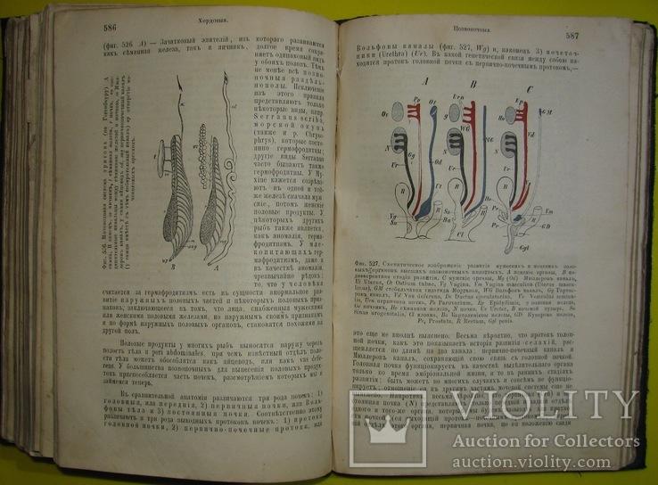 1898  Учебник зоологии. Рихард Гертвиг.  Одесса, фото №9