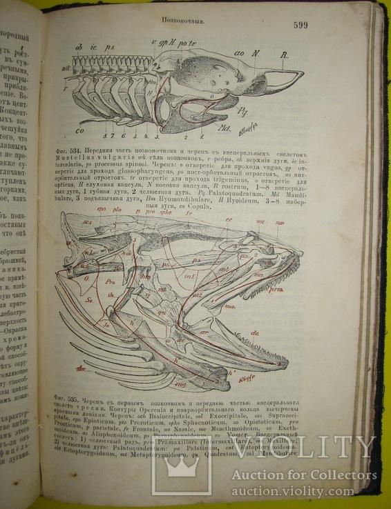 1898  Учебник зоологии. Рихард Гертвиг.  Одесса, фото №10