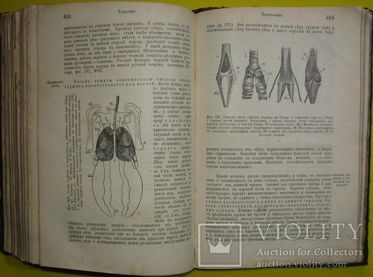 1898  Учебник зоологии. Рихард Гертвиг.  Одесса, фото №11