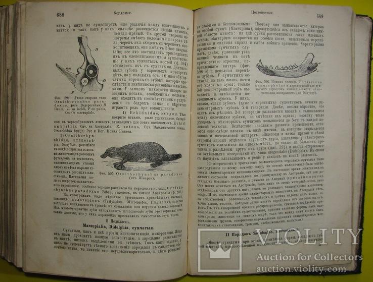 1898  Учебник зоологии. Рихард Гертвиг.  Одесса, фото №12