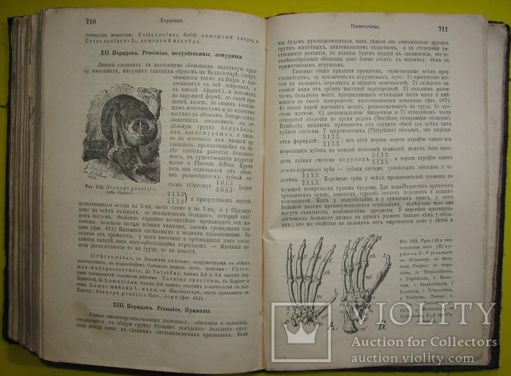1898  Учебник зоологии. Рихард Гертвиг.  Одесса, фото №13