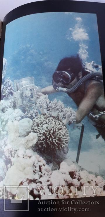 Мир коралов, фото №5