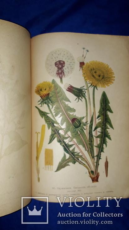 1917 Сбор и сушка лекарственных растений в России
