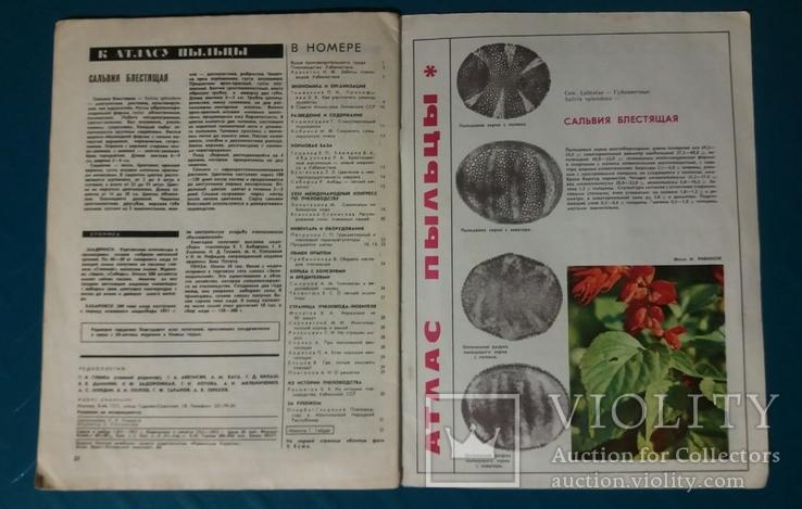 Пчеловодство №2 1972 г. журнал, фото №4