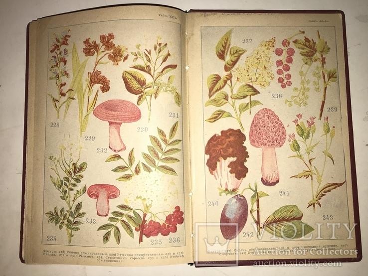 1898 Словарь Травник Траволичение Серьёзный Труд, фото №5