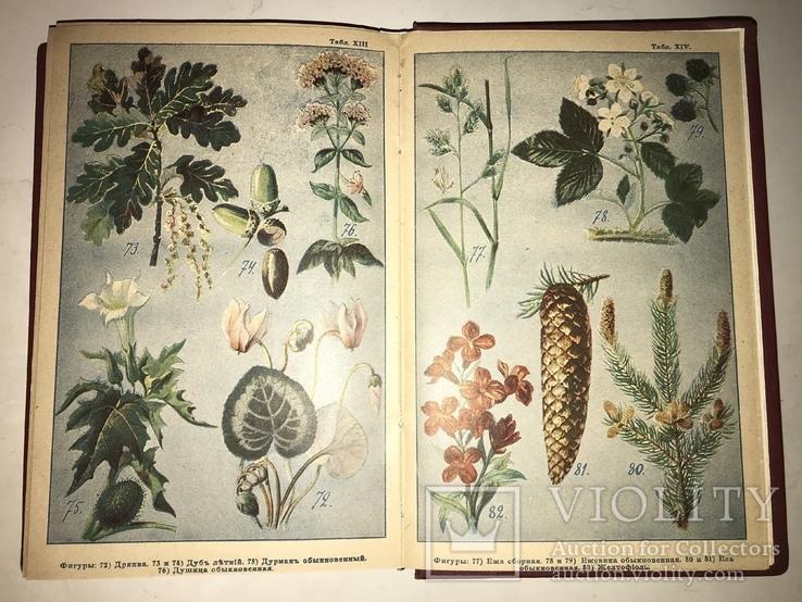 1898 Словарь Травник Траволичение Серьёзный Труд, фото №9