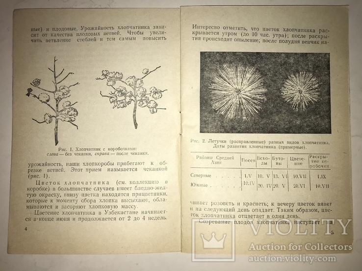 1951 Коллекция Хлопчатник Минералы и Горные Породы, фото №12