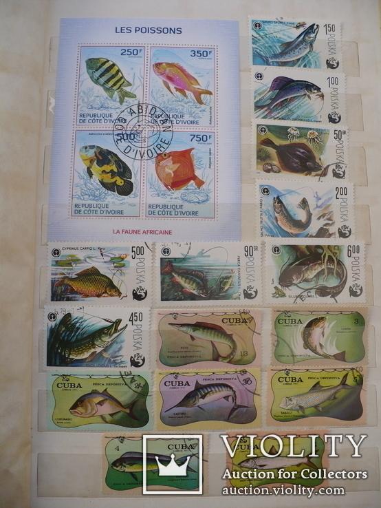 """Более 260 марок,25 бл.,мл, темы """"Фауна,флора"""" в альбоме, фото №11"""