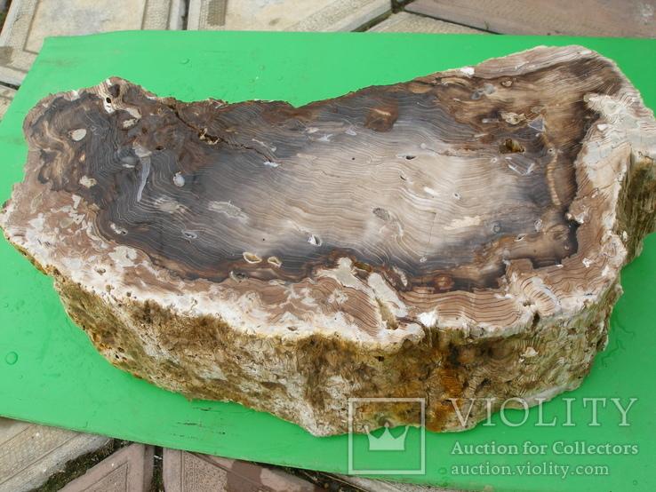 Окаменелое дерево, полированный срез, оригинальная текстура, опал.