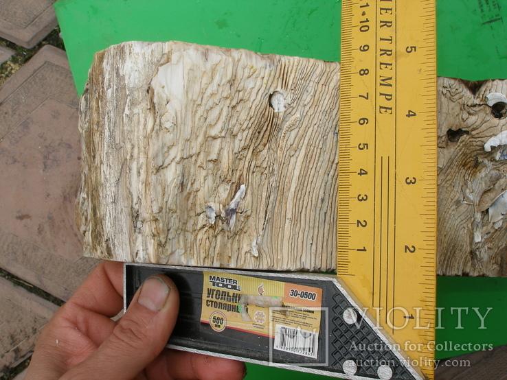 Окаменелое дерево, полированный срез, оригинальная текстура, опал., фото №7