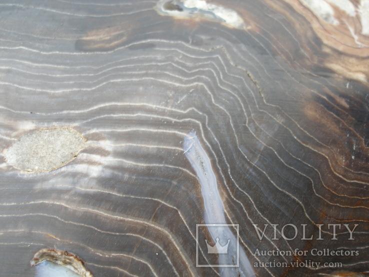 Окаменелое дерево, полированный срез, оригинальная текстура, опал., фото №8